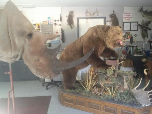 Rhino&Bear